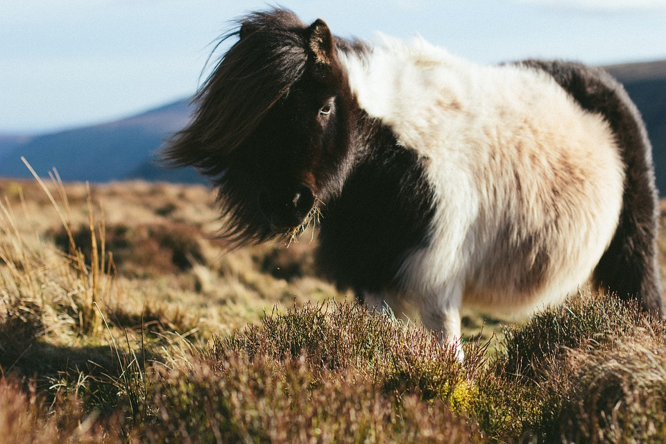 pony laten knippen